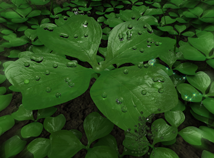 St. Patrick`s Day  screensavers  nfs3DClover