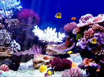 Animal world  screensavers  nfsAquarium03
