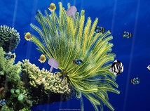 screensavers  nfsAquarium04