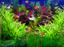screensavers  nfsAquariumFish01