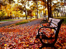 Autumn  screensavers  nfsBench01