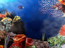 Fish  screensavers  nfsBigCoralReef