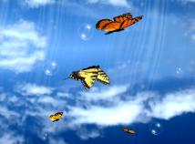 Animal world  screensavers  nfsButterfliesSky