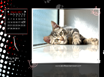 Calendar  screensavers  nfsCoolCats