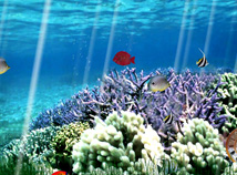 Fish  screensavers  nfsCoralReefOcean