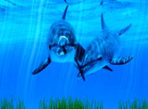 Fish  screensavers  nfsDolphin