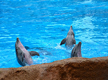 Animals  screensavers  nfsDolphinShow