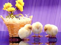 Easter  screensavers  nfsEaster2