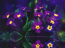Flowers  screensavers  nfsFabulousViolet
