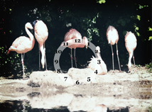 Birds  screensavers  nfsFlamingos