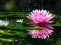 Animals  screensavers  nfsFrogInWaterLilies