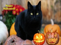 Holidays  screensavers  nfsHalloweenBlackCat