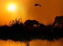 Animals  screensavers  nfsJungleatSunset