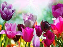 Nature  screensavers  nfsJustTulips