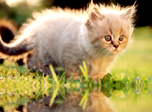 Animals  screensavers  nfsKittens