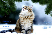 Winter  screensavers  nfsLandscapeswithCats