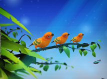 Birds  screensavers  nfsParrots