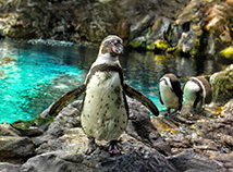 Animal world  screensavers  nfsPenguins