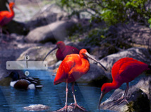 Animal world  screensavers  nfsRedBirds