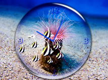 Animal world  screensavers  nfsSeaDepthClock