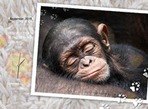 Animals  screensavers  nfsSleepingAnimals