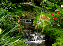 Nature  screensavers  nfsStreamInwood