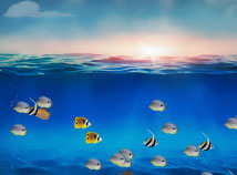 Fish  screensavers  nfsSunUnderwaterFish