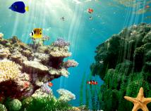 Fish  screensavers  nfsUnderWater09