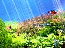 Fish  screensavers  nfsUnderWater12