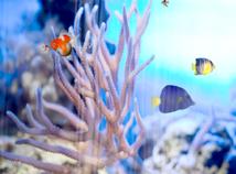 Fish  screensavers  nfsUnderWater13