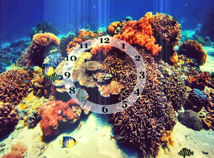 Analog  screensavers  nfsUnderWaterClock