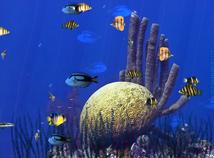 Fish  screensavers  nfsUnderwater19