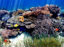 Fish  screensavers  nfsUnderwater3