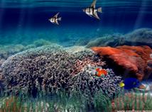 Fish  screensavers  nfsUnderwater4