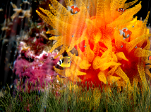 Fish  screensavers  nfsUnderwater5