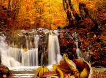 Thanksgiving day  screensavers  nfsWaterfallThanksgiving