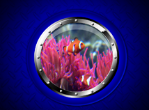 Animal world  screensavers  nfsWindowUnderwater