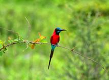 AfricanBird