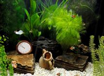 Aquarium Clock 05