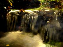 Autumn Wood Stream