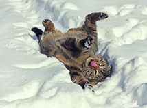 Winter-Katze