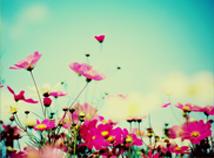 FlowersInSeptember