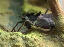 Insekten 1