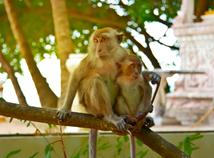 MonkeyMum