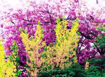 MotleyFoliage