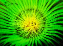 Oceanic Plant