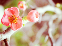 SpringTwig