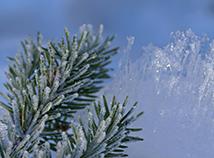 Zweig im Schnee
