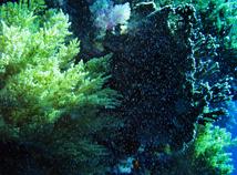 UnderwaterView