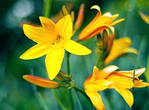 Gelbe Blütenblätter